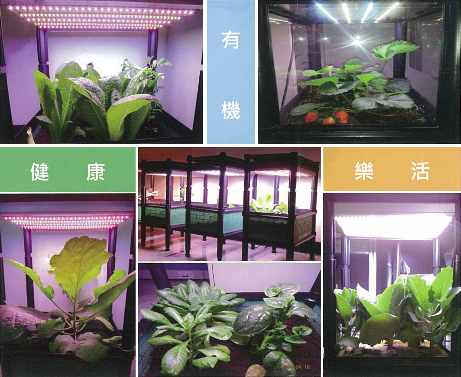 Chiplus's LED horticultural lamps are unique in having six wavelengths that simulate round-the-clock natural light.