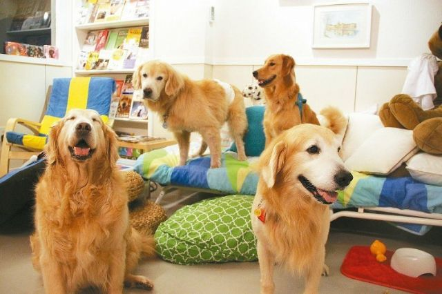 Pet products are a growing market driven by increasing pet ownership that is seen to enhance well-being. (photo courtesy of UDN.com).