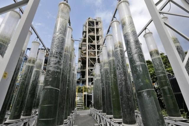 圖為台泥花蓮和平廠水泥窯旁,矗立著一根根超過一人高的綠色巨型柱狀袋,正在自然光下打入二氧化碳培養。 聯合報系資料照