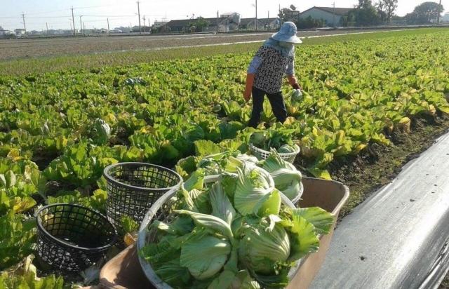 中國與東協的農業合作不斷,農產品貿易往來日益熱絡。聯合報資料照片