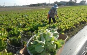 Cens.com News Picture 中國、東協 農業合作獲雙贏