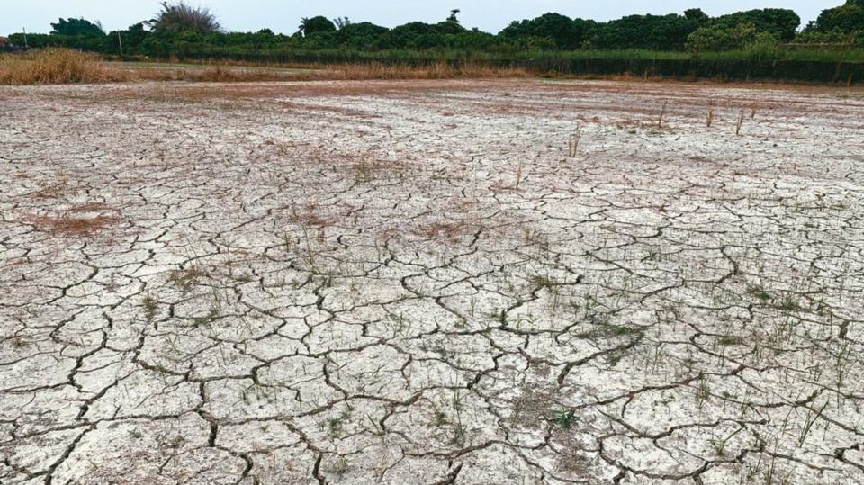 台南農地乾旱龜裂。 聯合報系資料庫