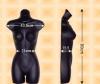 Free-Hanging Ladies' Torso--Slender Waist
