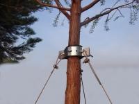 Adjustable tree staker