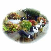 园艺(造型盆栽)