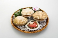Half Shell Scallop