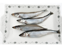 Cens.com Atlantic Capelin JYY FISHERIES CORP.