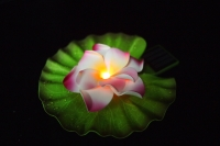 Solar Operated Flower Floating Light