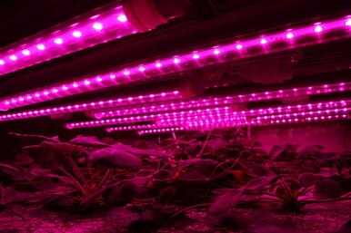 T8 4Feet Led Grow Light Tube