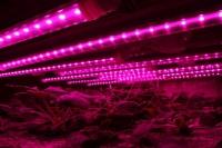 T8 4Feet Led Grow Light Tube