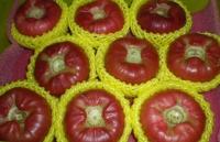 Wax apple