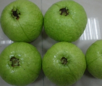 Cens.com Guava CHANG LUNG AGRICULTURE CO., LTD.