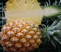 Cens.com Pineapple CHANG LUNG AGRICULTURE CO., LTD.