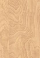 Wood Grain Decorative Paper/Melamine Paper/PVC/PETG Film- Elm