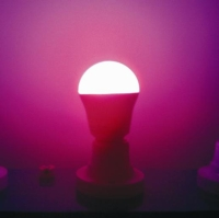LED Lamps / Other Special-Purpose Lights