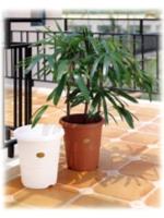 Nursery Pot / Protagation Pot